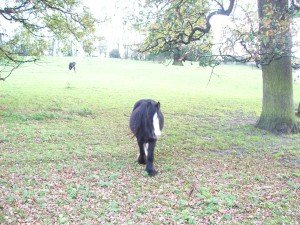 Horse opposite Anna Sewell House